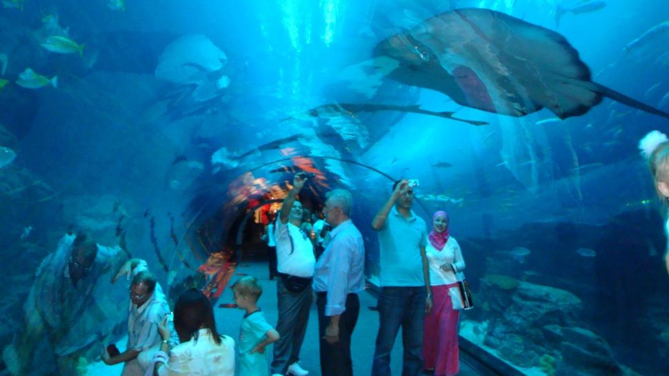 Aquarium and Underwater Zoo Dubai