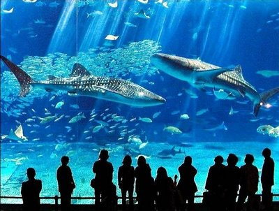 Churaumi Aquarium Okinawa, Japan