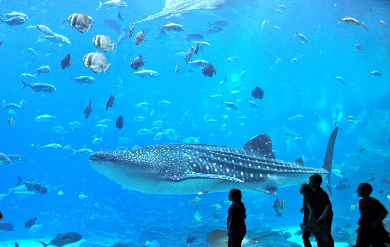 Top Seven Biggest Aquariums Of The World