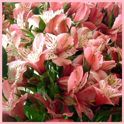 Top 10 Wedding Flowers: Top Ten Flowers Used In Wedding Decoration